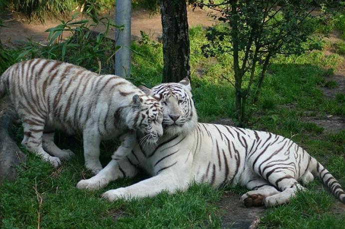 Animais do zoológico nacional de Chile