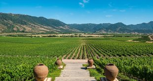 Rota do Vinho Vale Colchagua