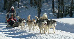 Trenós puxados por cães Termas de Chillán