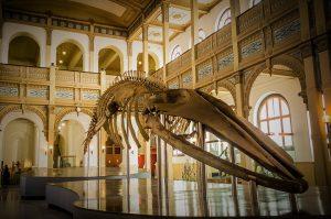 visite-o-museu-nacional-de-história-natural-de-santiago